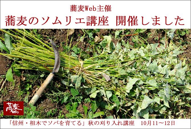 soba-web670刈り入れ1